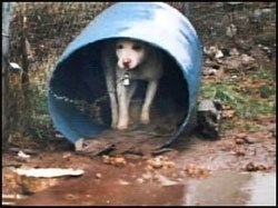 no to barrel dogs living in crete
