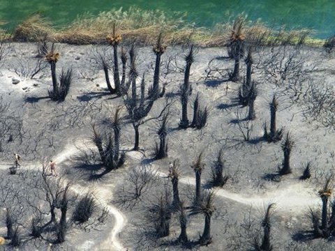preveli palm forest burned